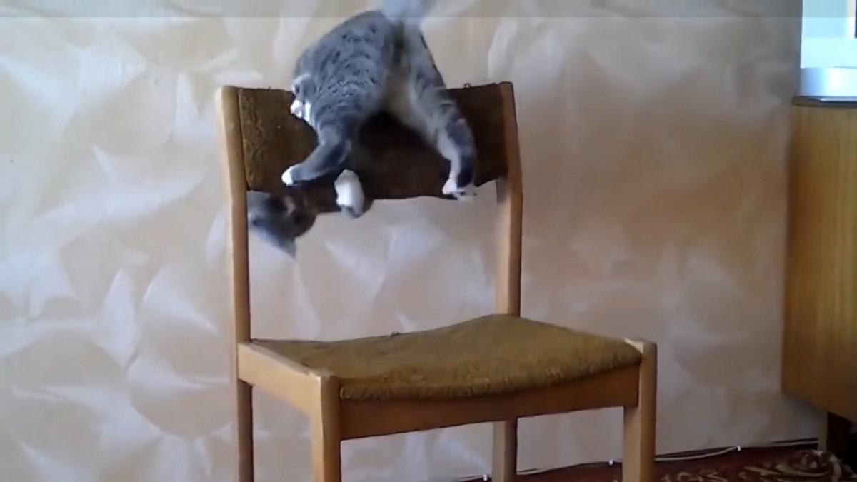 ただの椅子でもこの通り!とってもアクロバティック猫ちゃん