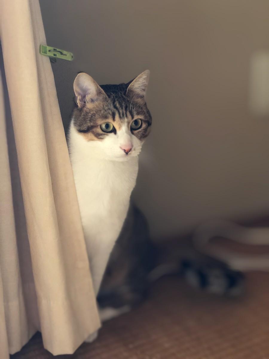 愛猫が問題行動を起こすのは飼い主へのサインかも…私が試した1つの対処法