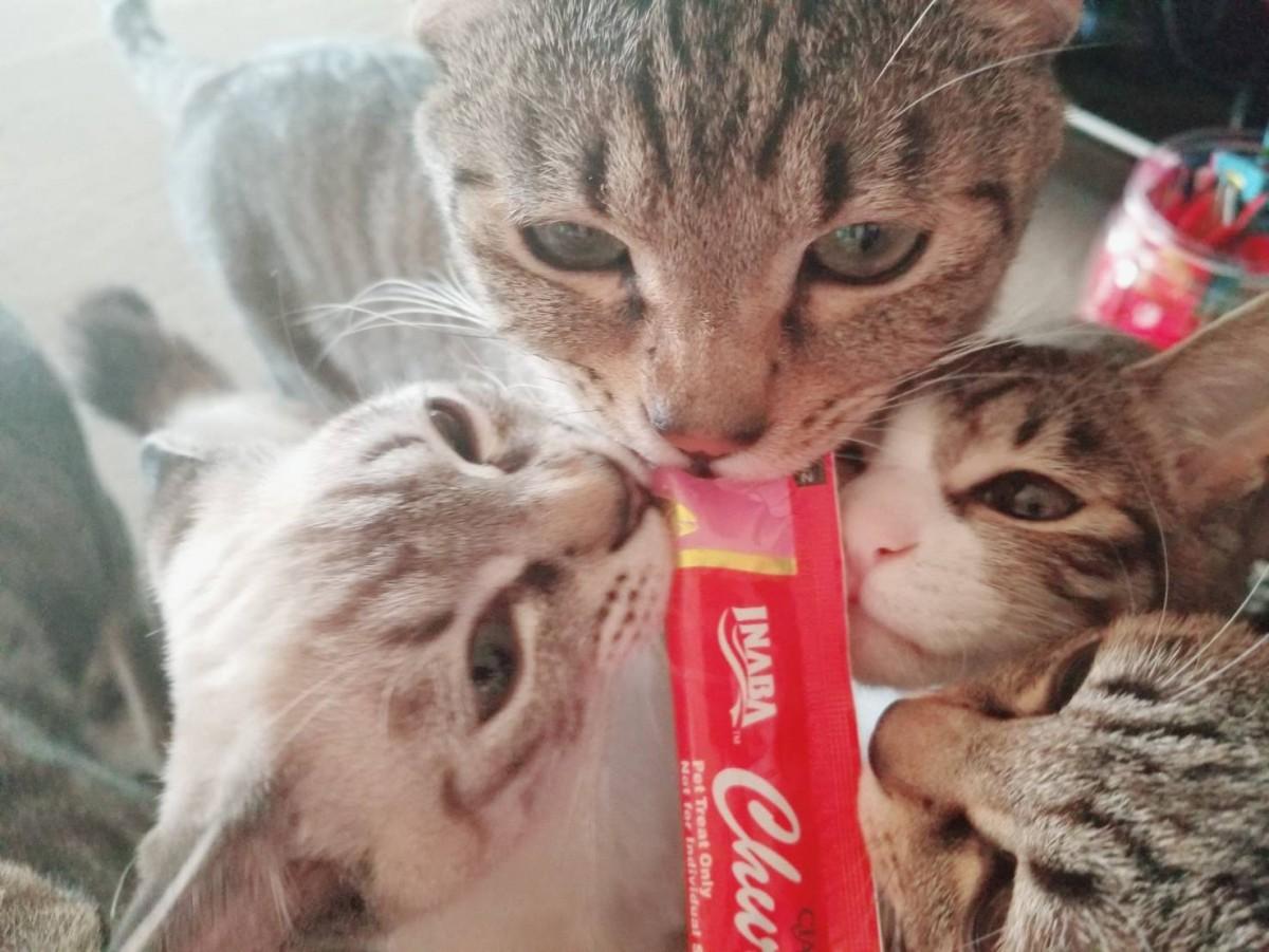 ちゅーるは海外の猫にも大人気♪反応や日本との違い