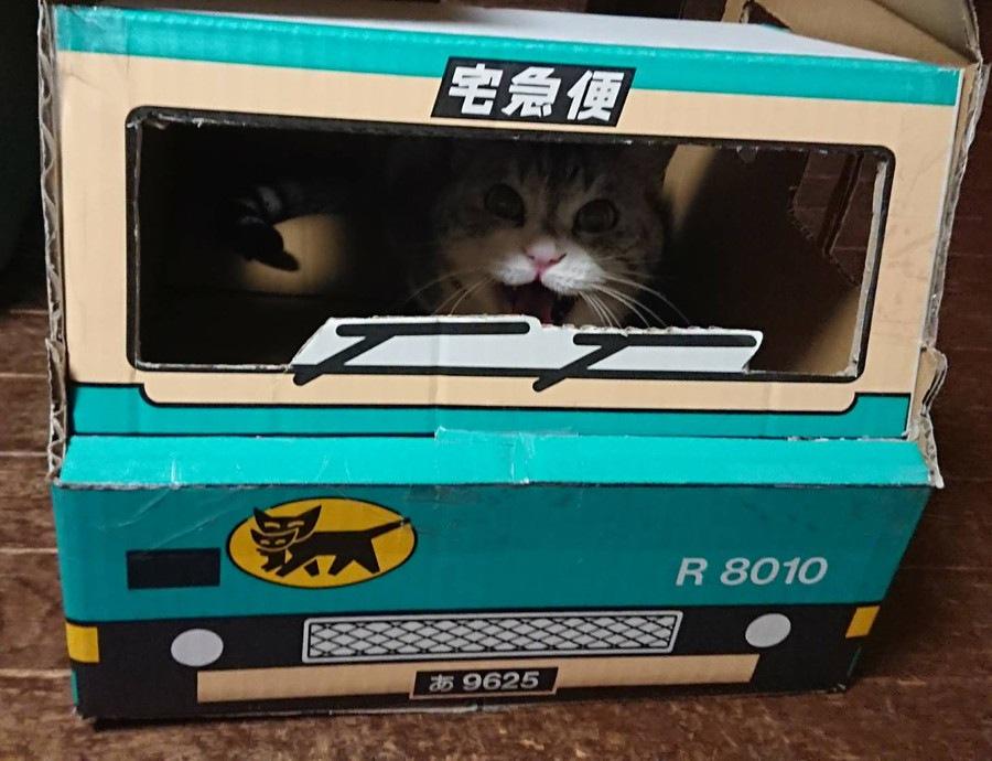 クロネコヤマトさんのダンボールを使った猫のお家をDIY