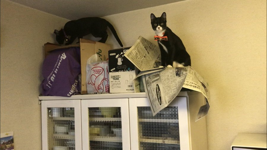 黒猫の姉妹と家族に!2匹の天使と幸せライフ