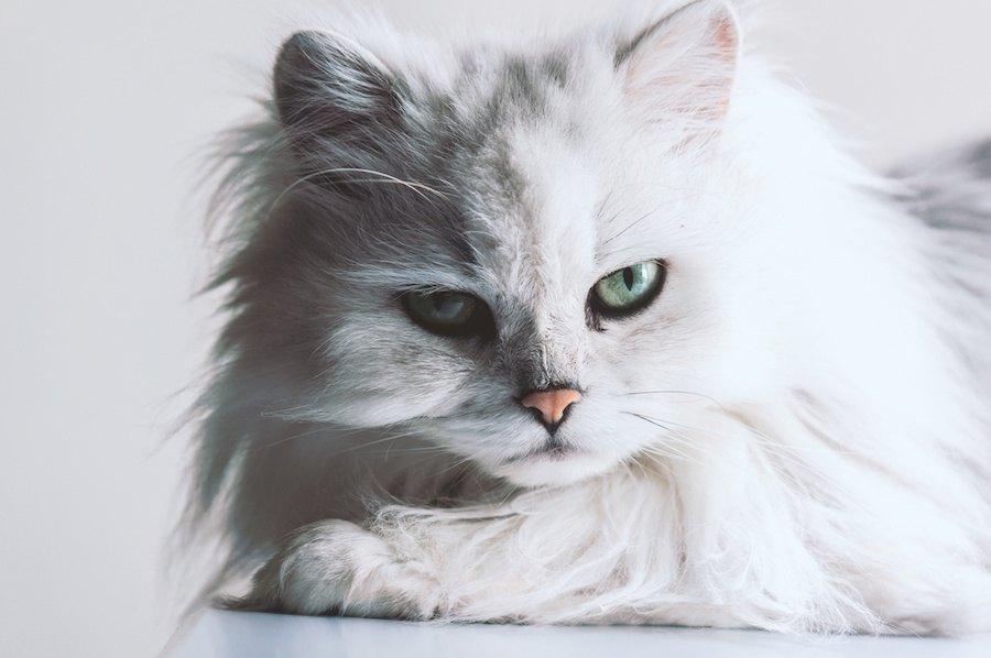 かっこいい猫たちの画像10連発!