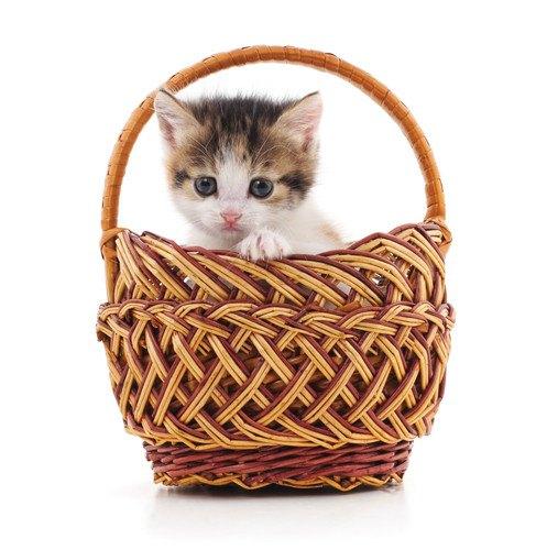 子猫を病院に連れていく時にする6つの検査項目と費用