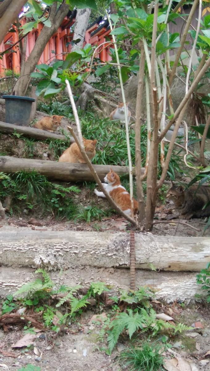 猫のいる町京都『伏見稲荷大社』の猫さんたち
