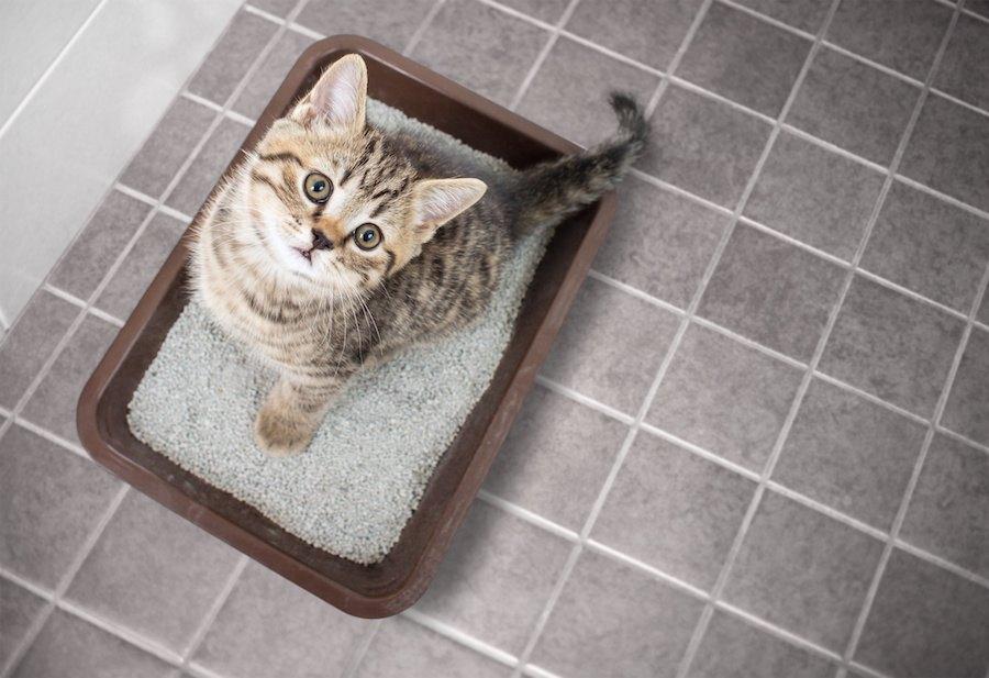 流せる猫砂がトイレで詰まる!3つの対処法、おすすめ商品