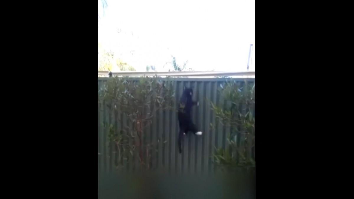 猫の脱走防止グッズ『Oscillot』に惨敗する猫達