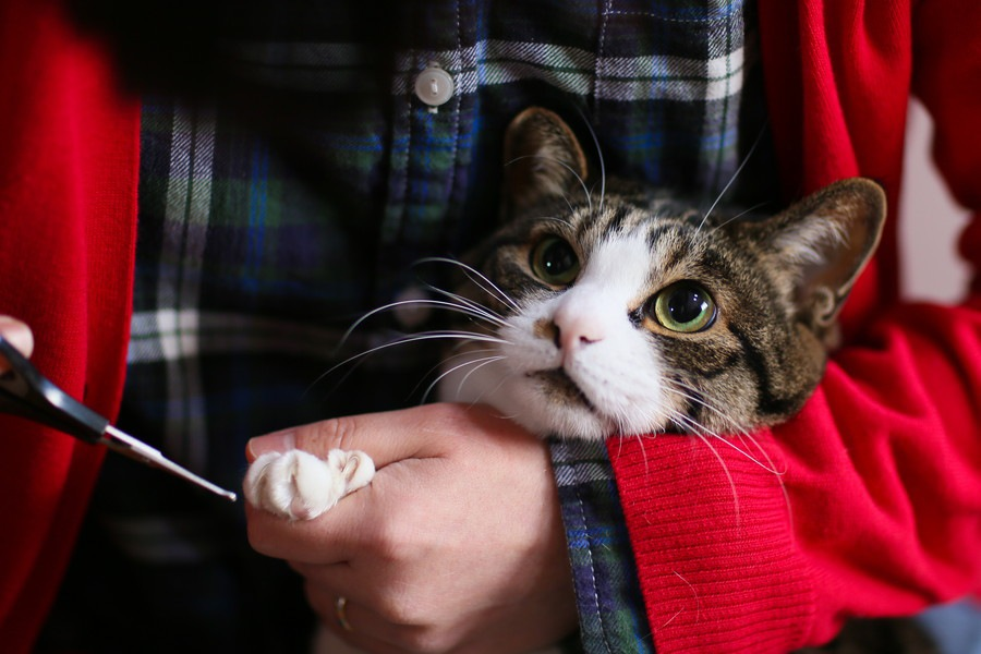 猫の爪切りの状況別の方法と安全に切る工夫