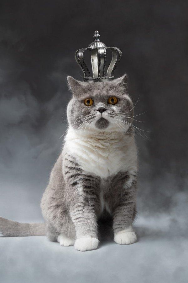 あなたの愛猫は幸せ?ダメ飼い主診断11項目