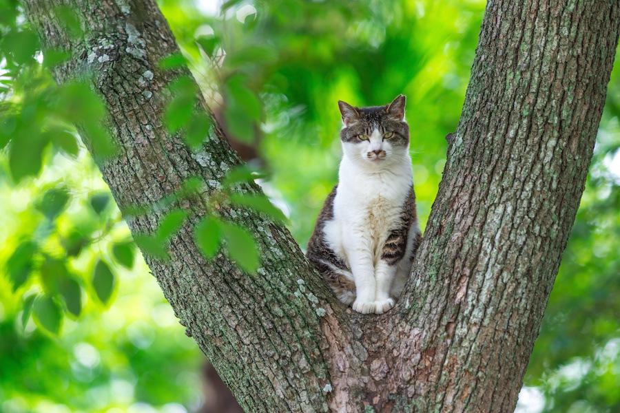 猫が木登りしたくなる4つの理由と室内で使えるおすすめグッズ3選