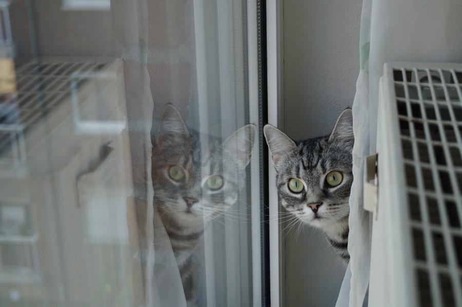 猫が隠れる5つの理由と出てきてもらう方法