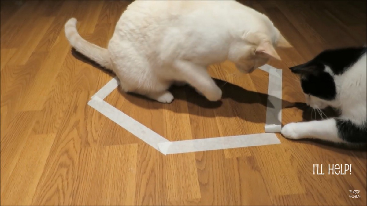 猫転送装置からの脱却!2匹の猫たちの友情?!