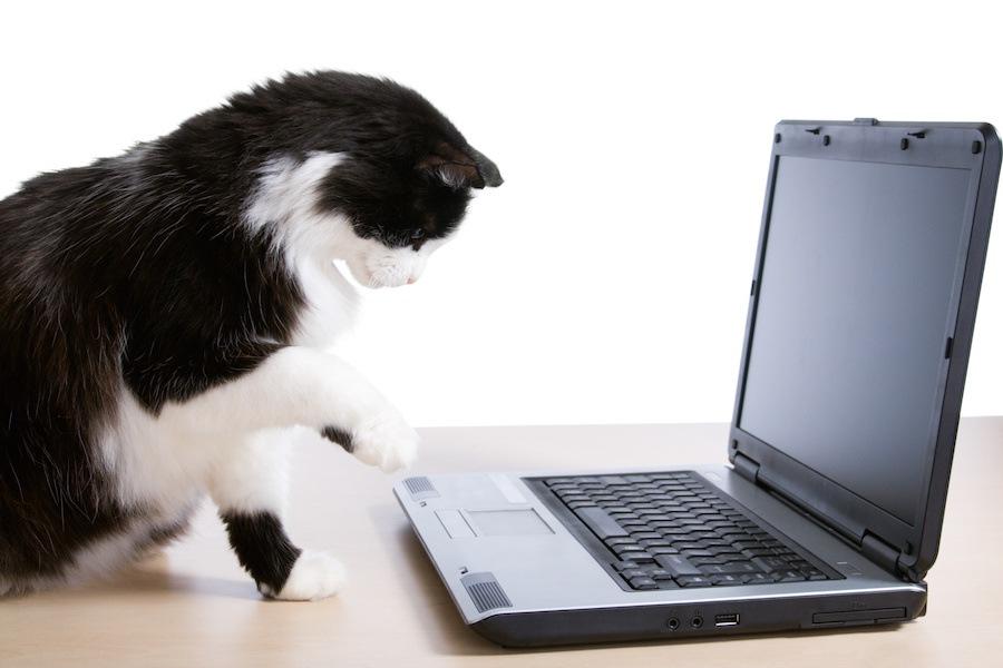猫が飼い主の邪魔をしてくる時の3つ心理