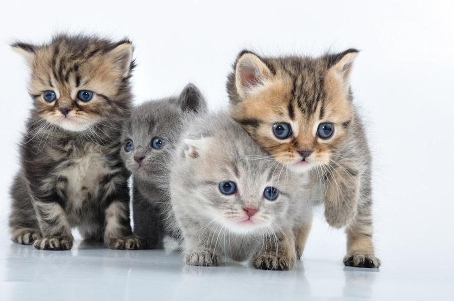 愛猫の毛色や柄でみる猫の性格診断!キジトラ、茶トラ白、ブチはどんな性格?