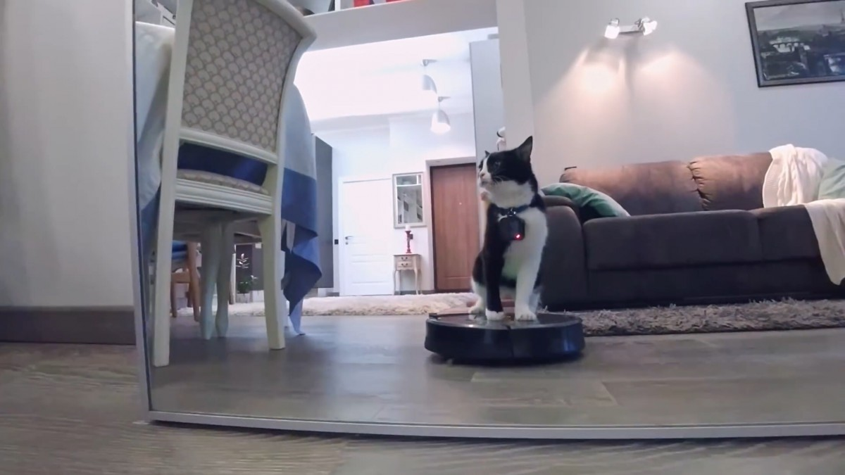 """まるで猫になったみたい!猫につけたカメラで撮影した""""猫目線""""な映像"""