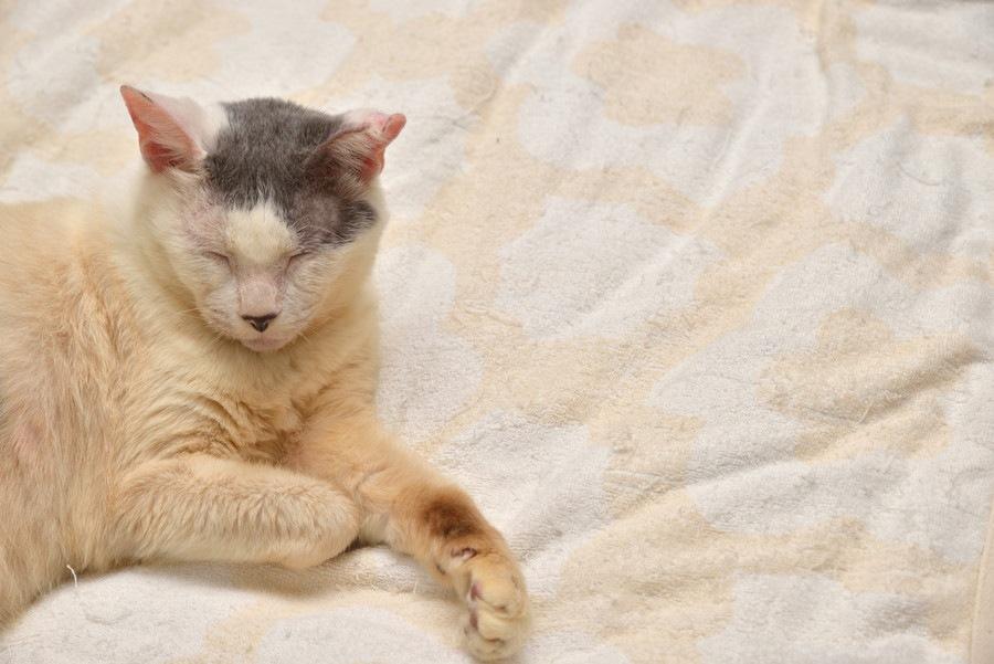 老猫、病気の猫にも!ペットの為のデイサービスとは?