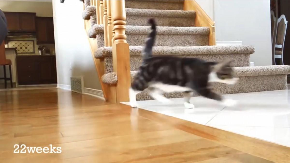 同じ位置から撮り続けた、12週→52週までの猫の成長記録