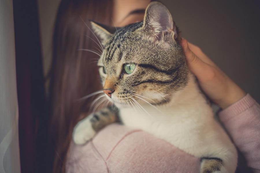猫が行方不明になった時の7つの探し方