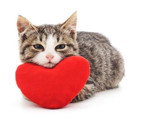 うちの猫が一番かわいい!『親ばか』あるある10連発