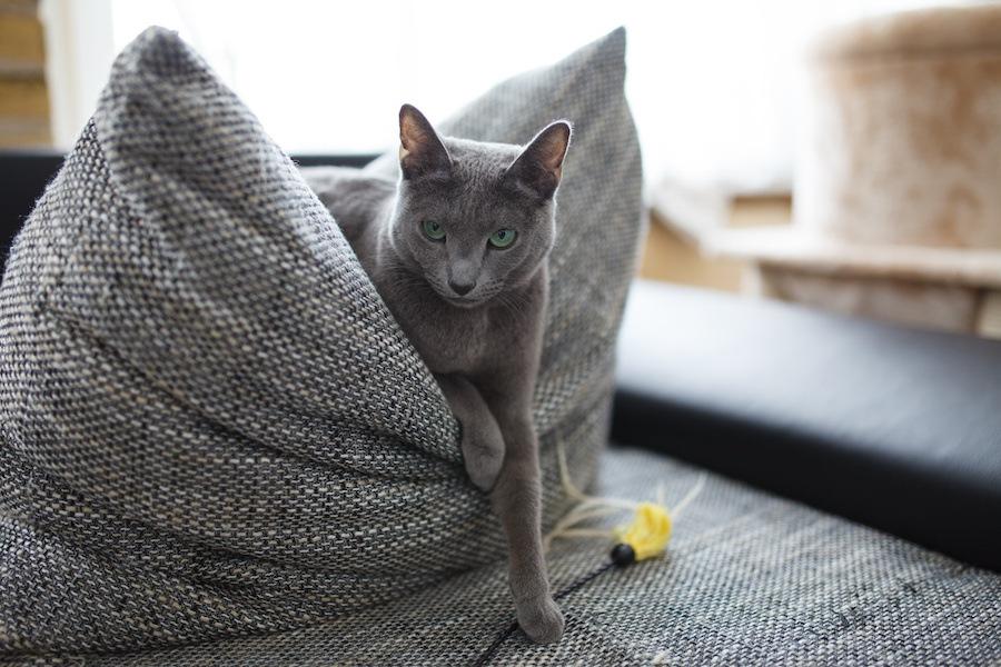 イケメン猫が勢ぞろい!カワイイだけじゃない猫の画像5選