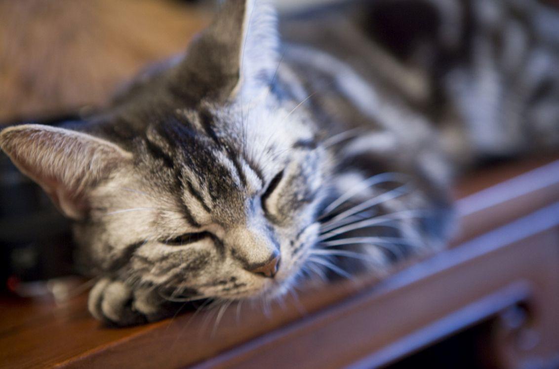 猫がしゃっくりをする原因とその対策