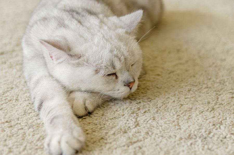 猫に頭痛があるのか そのサインと治療法