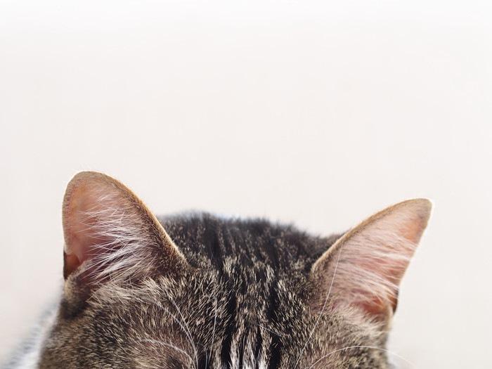 猫の気持ちは仕草でわかる!代表的な行動7つ