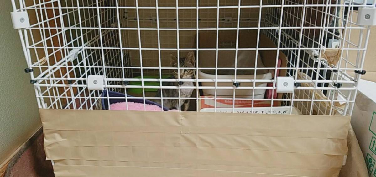 猫ハジラミに要注意!保護した子猫に寄生しているかもしれません!