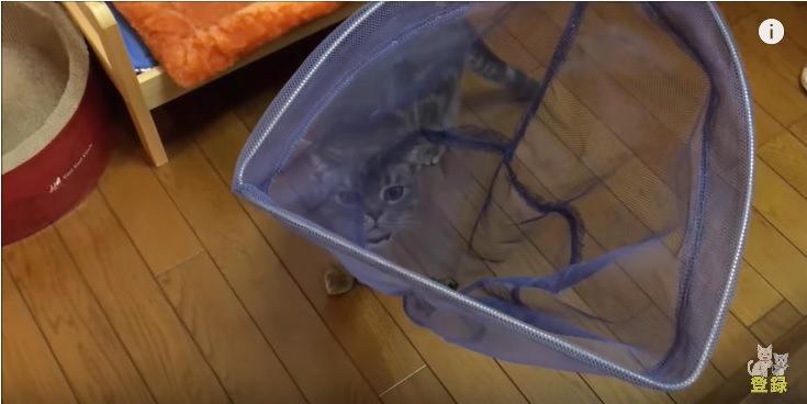 初めてのコウモリに驚く猫