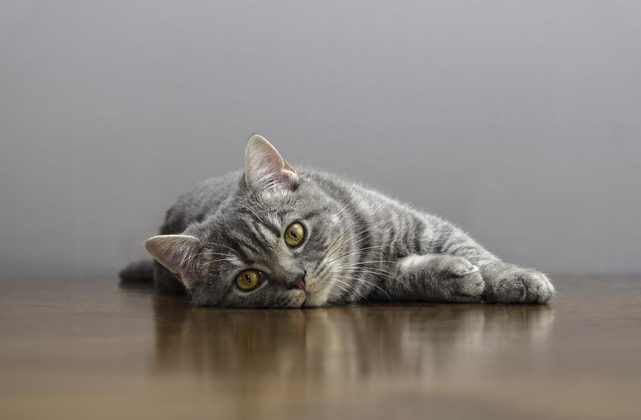 猫の声がガラガラになる3つの理由と対処法