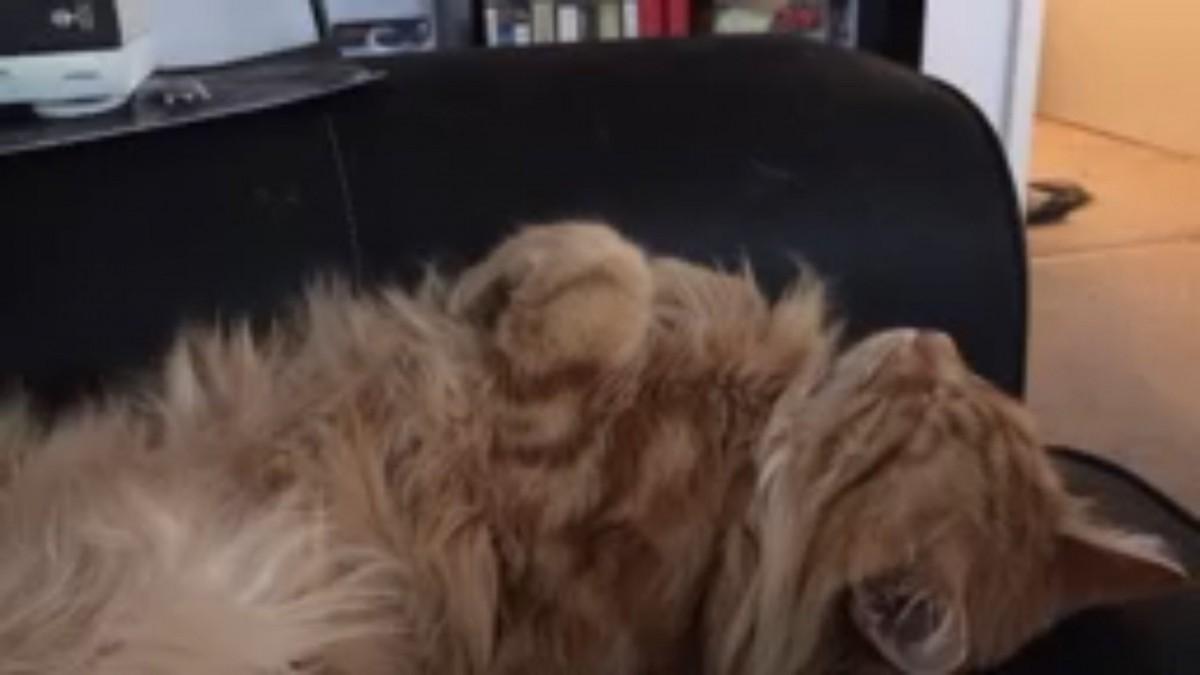 猫ちゃんのお鼻をポチリとすると…
