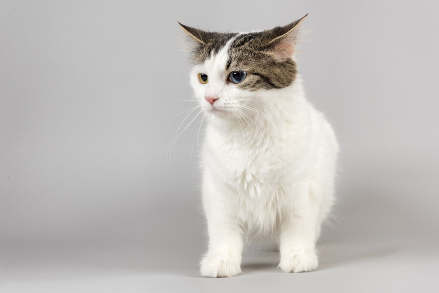 性格からみた猫の種類や特徴、その飼い方