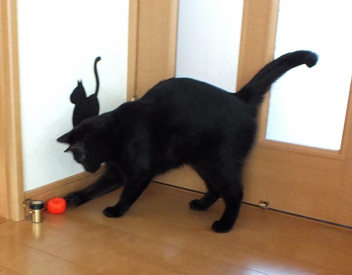 ミカンネットを丸めるだけ!猫の為の『簡単格安コロコロボール』を作ってみた!