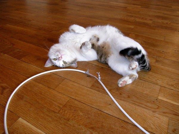 猫が邪魔したくなっちゃう「飼い主」の行動6選
