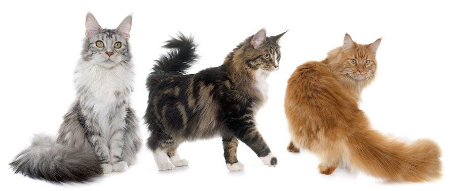 大型の猫用システムトイレを購入する4つの選び方、おすすめ商品