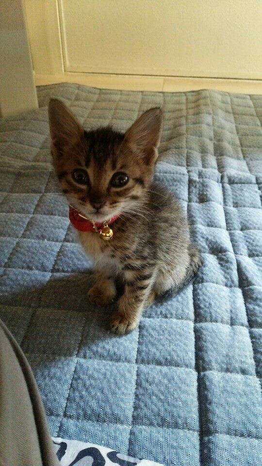人懐っこい野良猫がいるのはどうして?