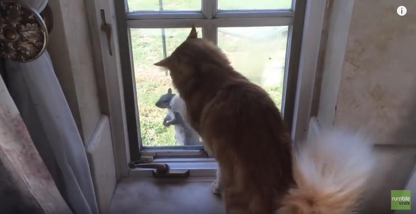 リスに遊ばれる猫!窓の外にいるリスが気になって仕方ない猫さん