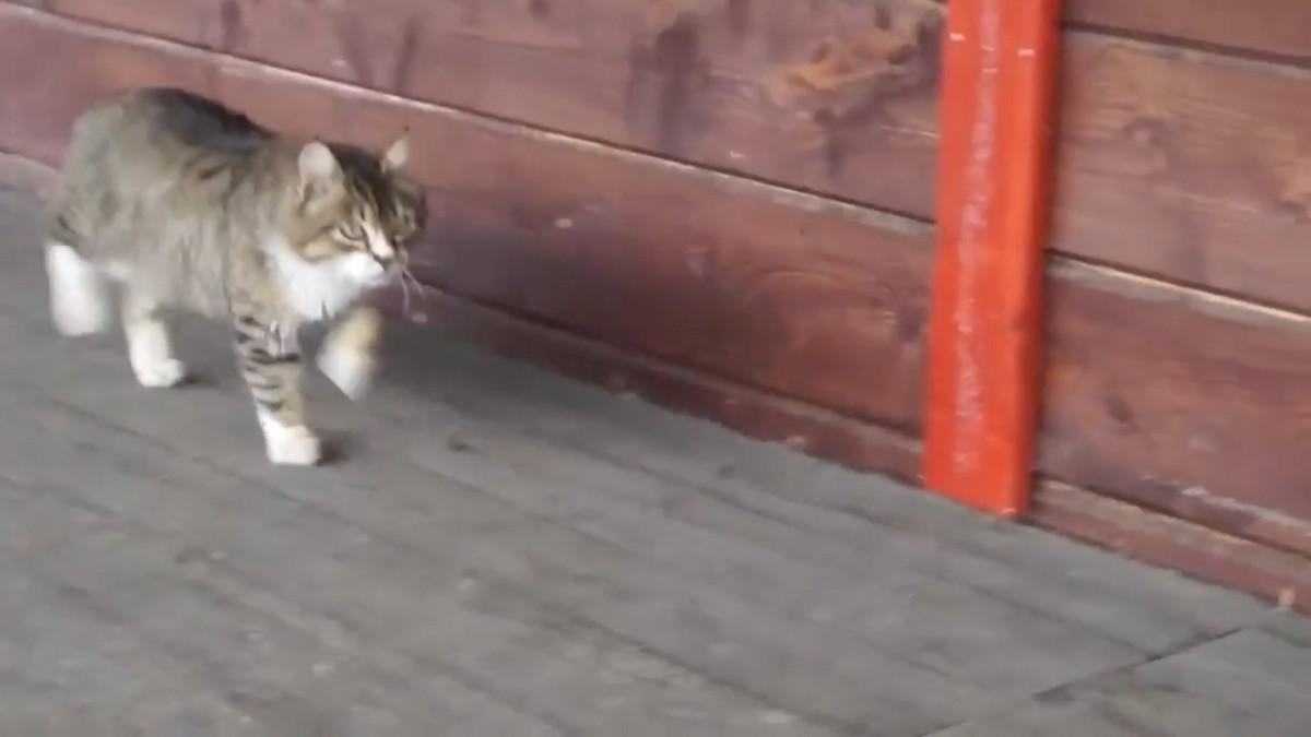 行進みたい!トコトコ足踏みしながら歩く猫ちゃん