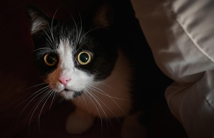 猫がそわそわする6つの原因