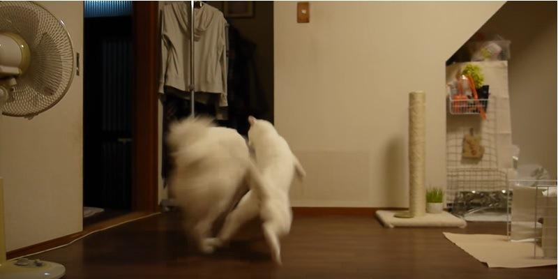 犬に文句を言う猫!怒る猫を無視して立ち去ろうとした犬の運命は…