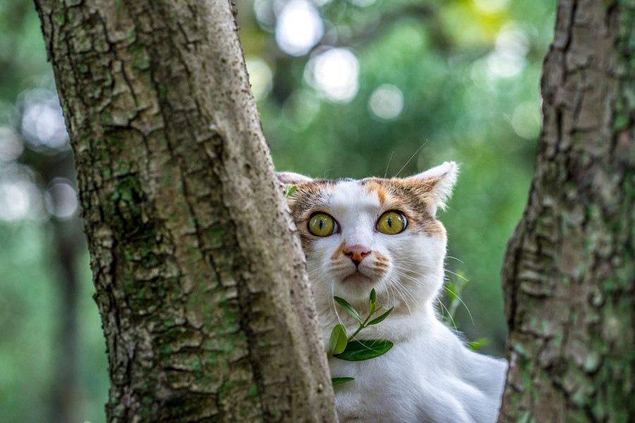 曲がった尻尾をもつ「幸運の猫」鍵尻尾のルーツと原因を検証!