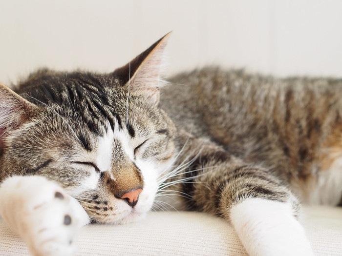 猫が人間だったら何歳?簡単計算式でニャンコの成長を知ろう!