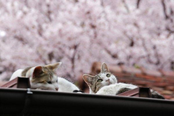 猫がモチーフの和菓子おすすめ5選!