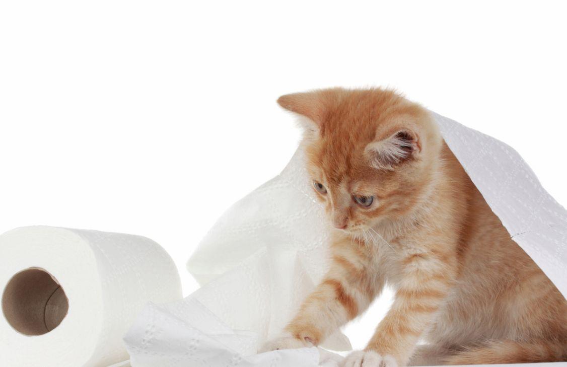 猫の正しいトイレのしつけ方法