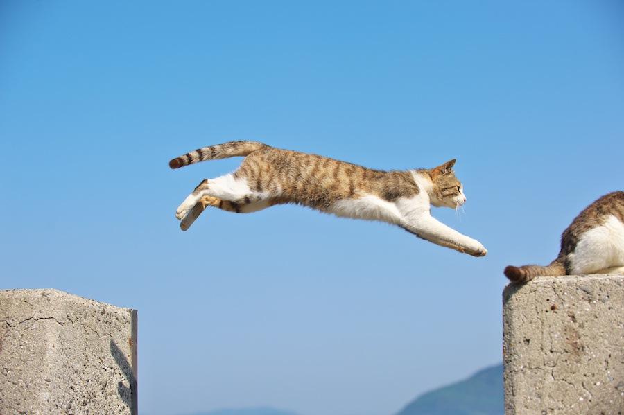 猫の模様11選!種類を一挙ご紹介!