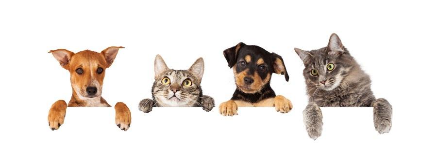 猫が犬より品種が少ない理由