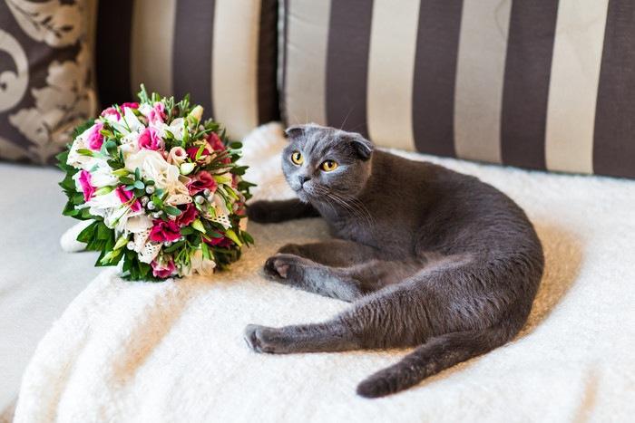 猫と触れ合う婚活パーティーの内容