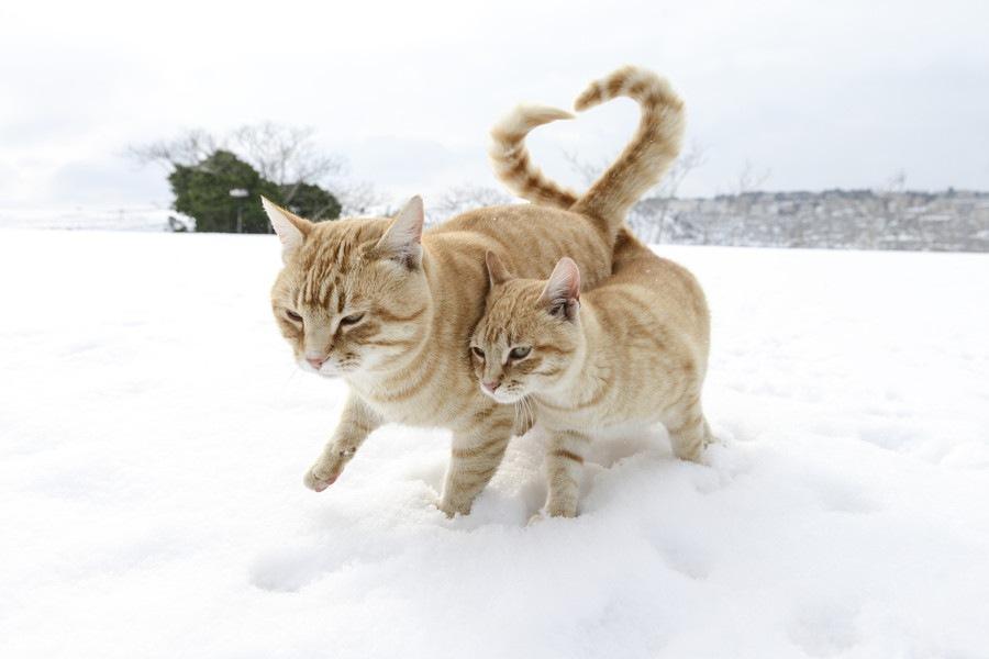 猫のさかり期間と注意点