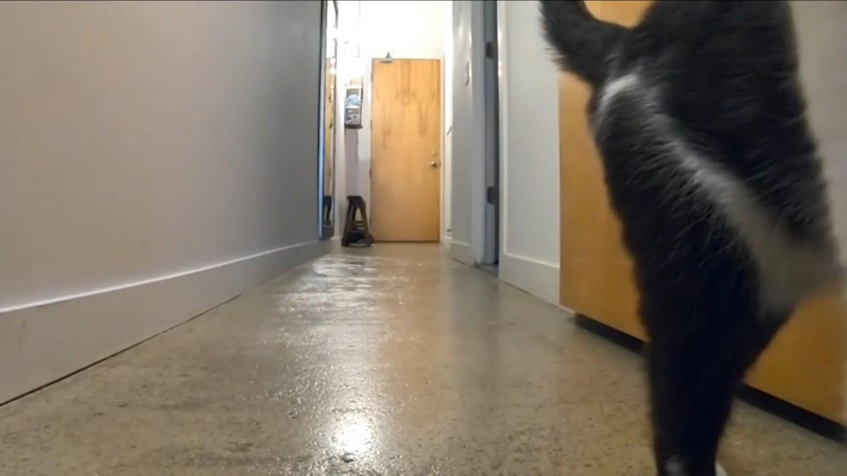「扉が開く前に鳴く」猫と「扉が開いた後に鳴く」猫