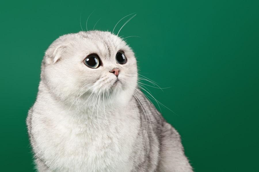 猫とアザラシは似てる?写真で比較してみよう