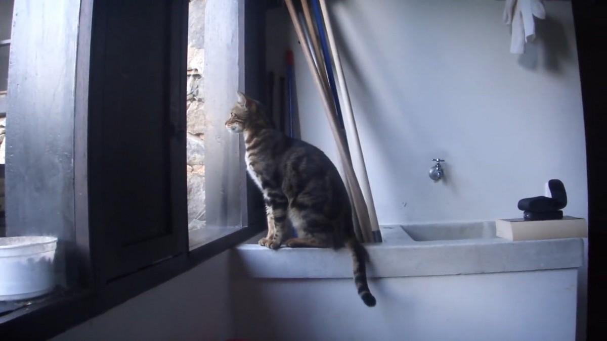 外に行きたい!その一心で窓を開けようと頑張る猫ちゃん